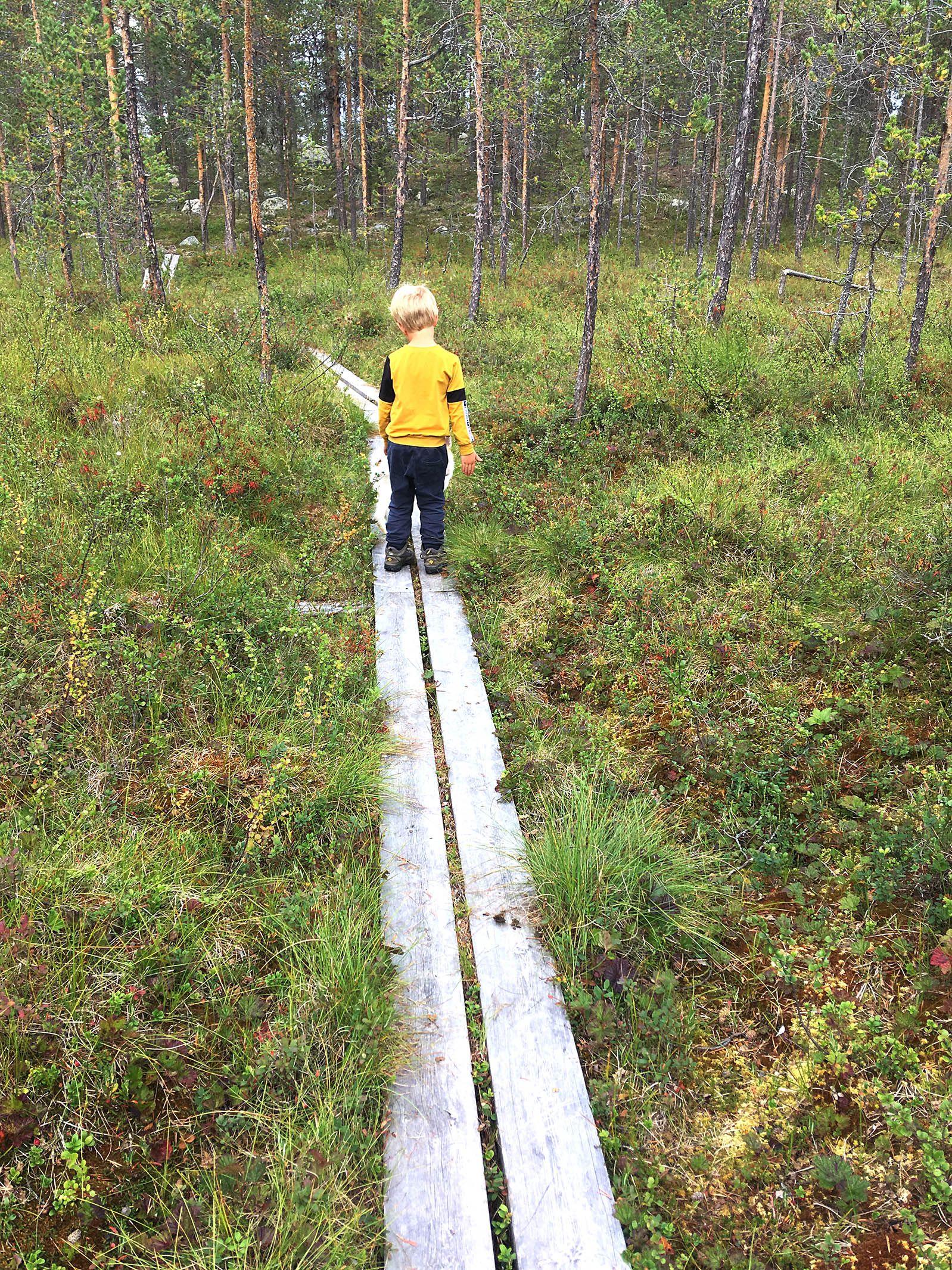 Moorlandschaft Lappland