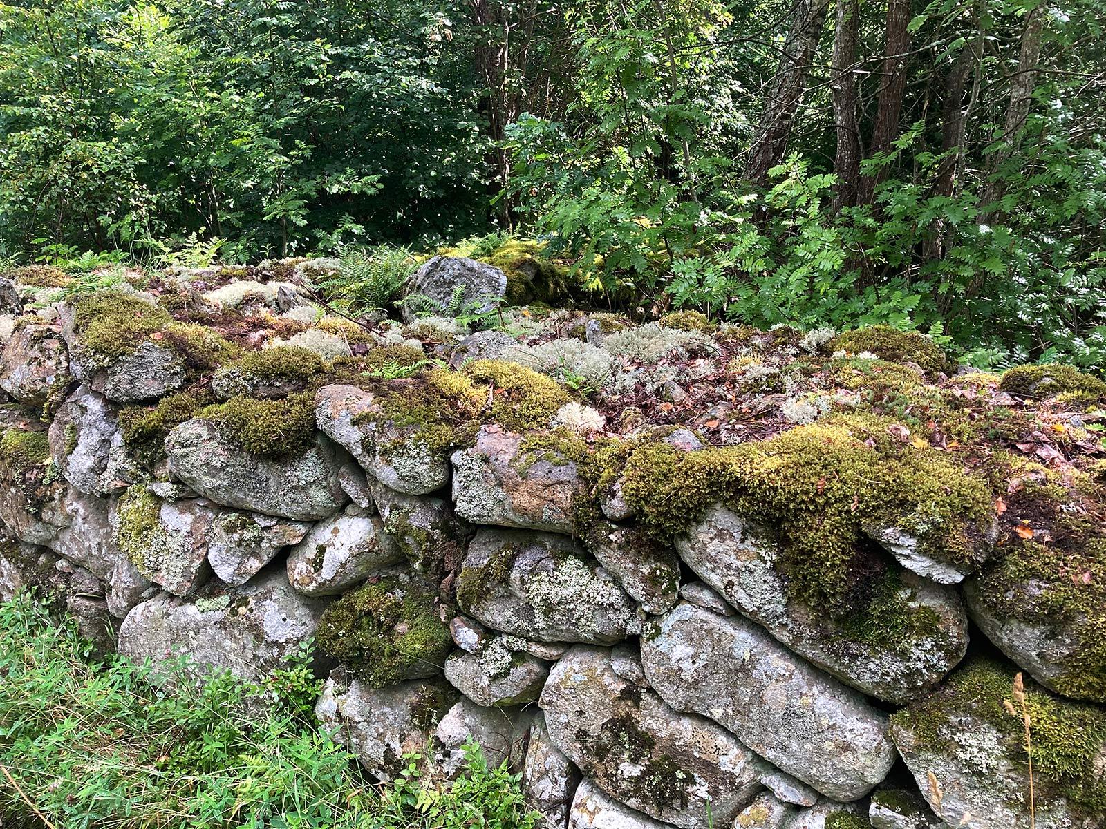 Natursteinmauer ehemalige Waldweide/Schweden