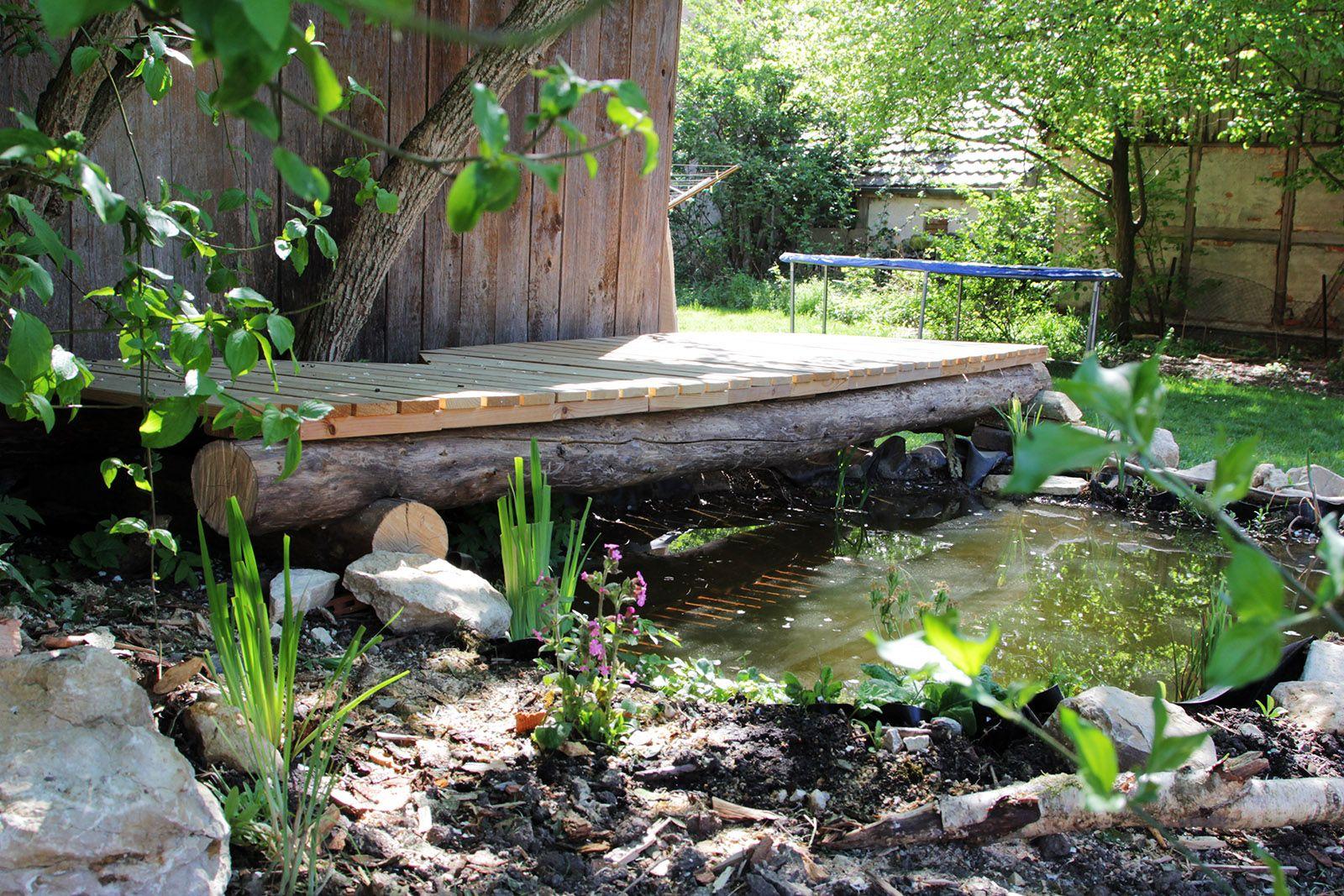 Neu angelegter Teich mit Teichrandgesellschaft IMG_5799.JPG