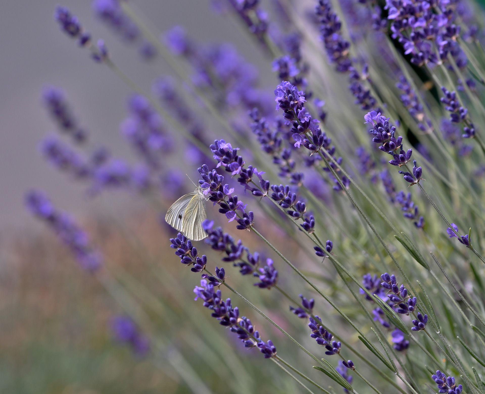 butterfly-4326534_1920.jpg