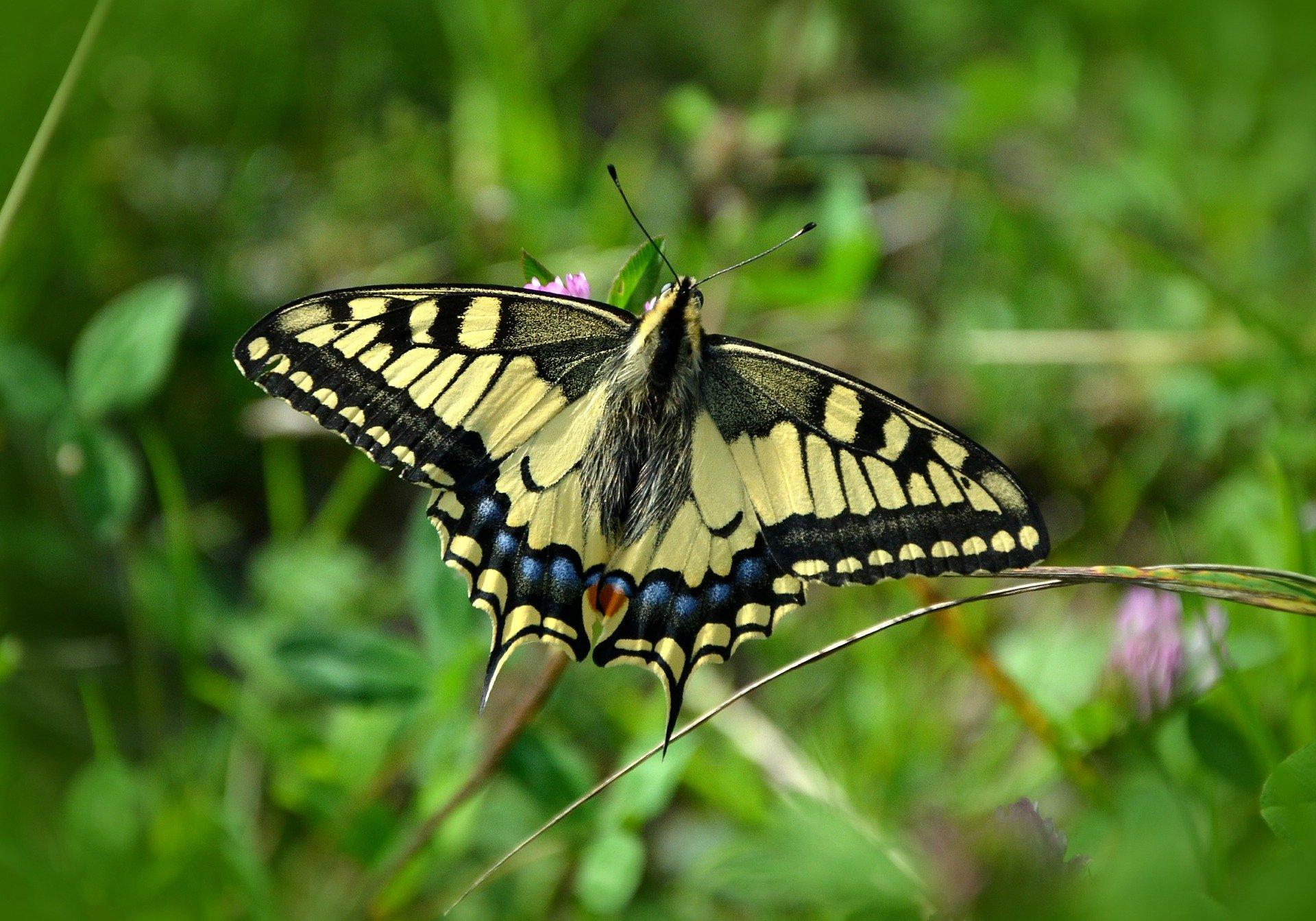butterfly-491166_1920.jpg