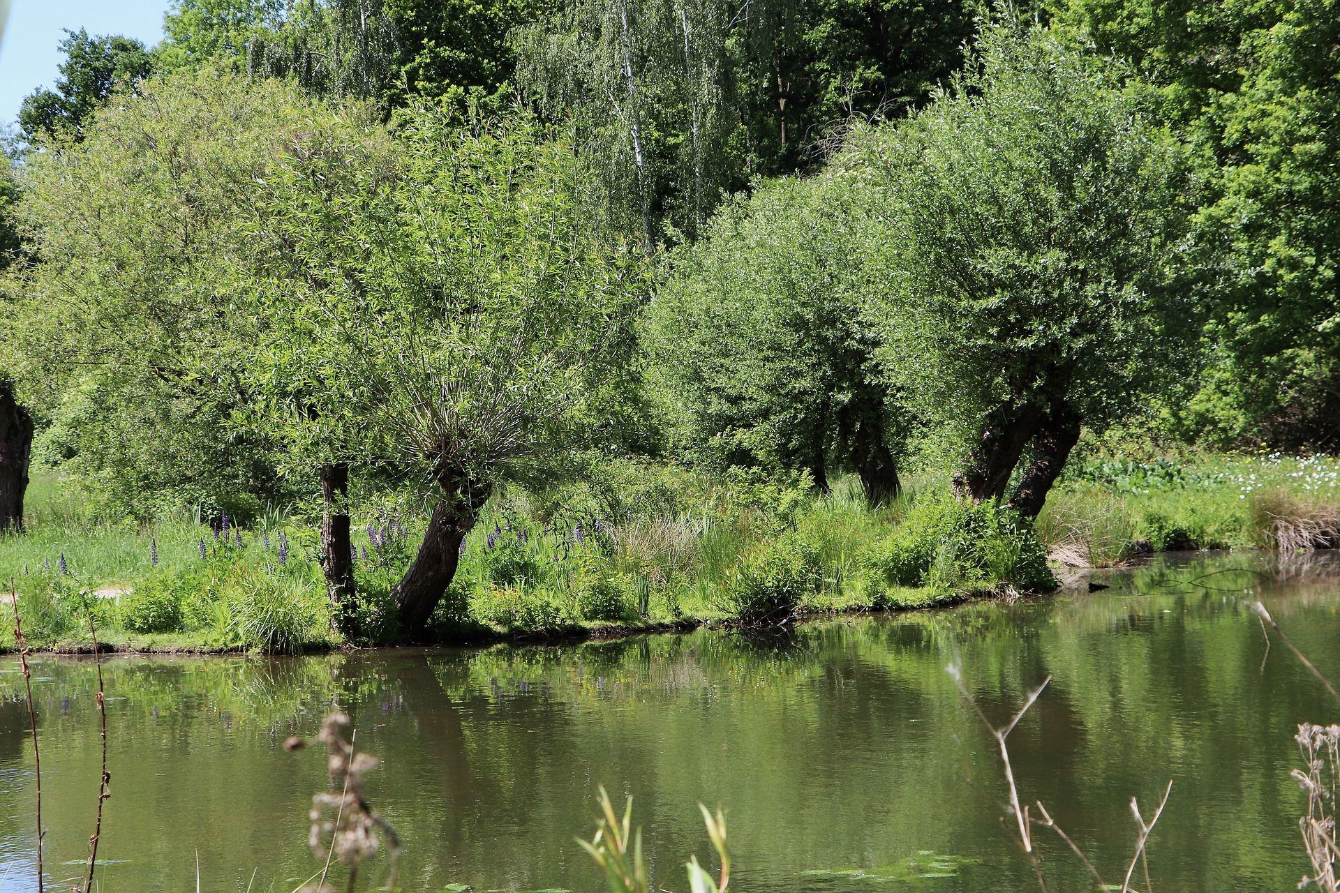 Flussauen-Landschaft