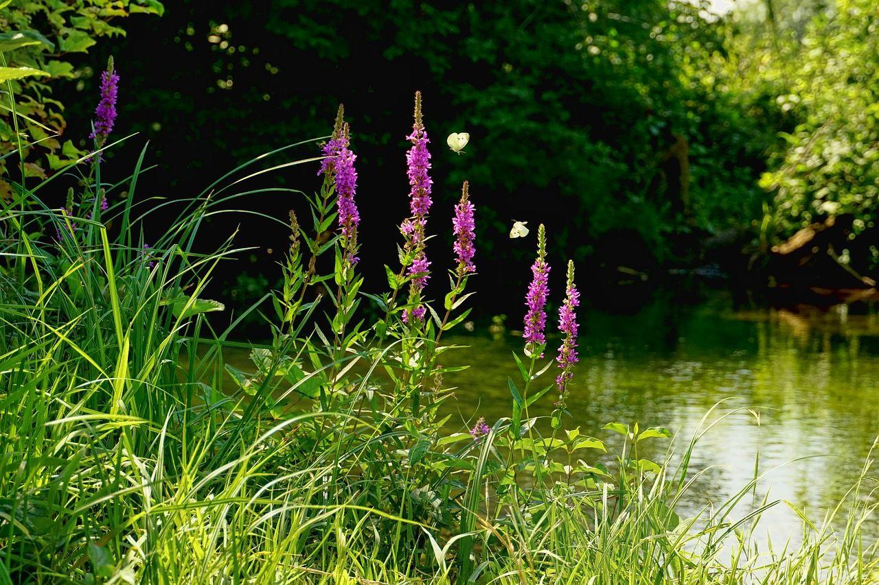 nature-3593180_1280.jpg