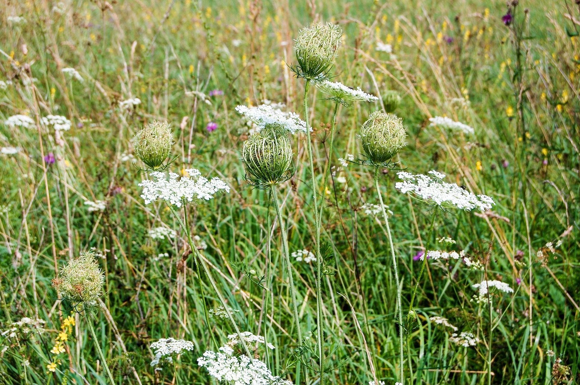 Magere Blumenwiese