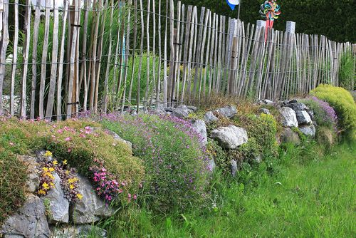 Natursteinmauer  im Frühling