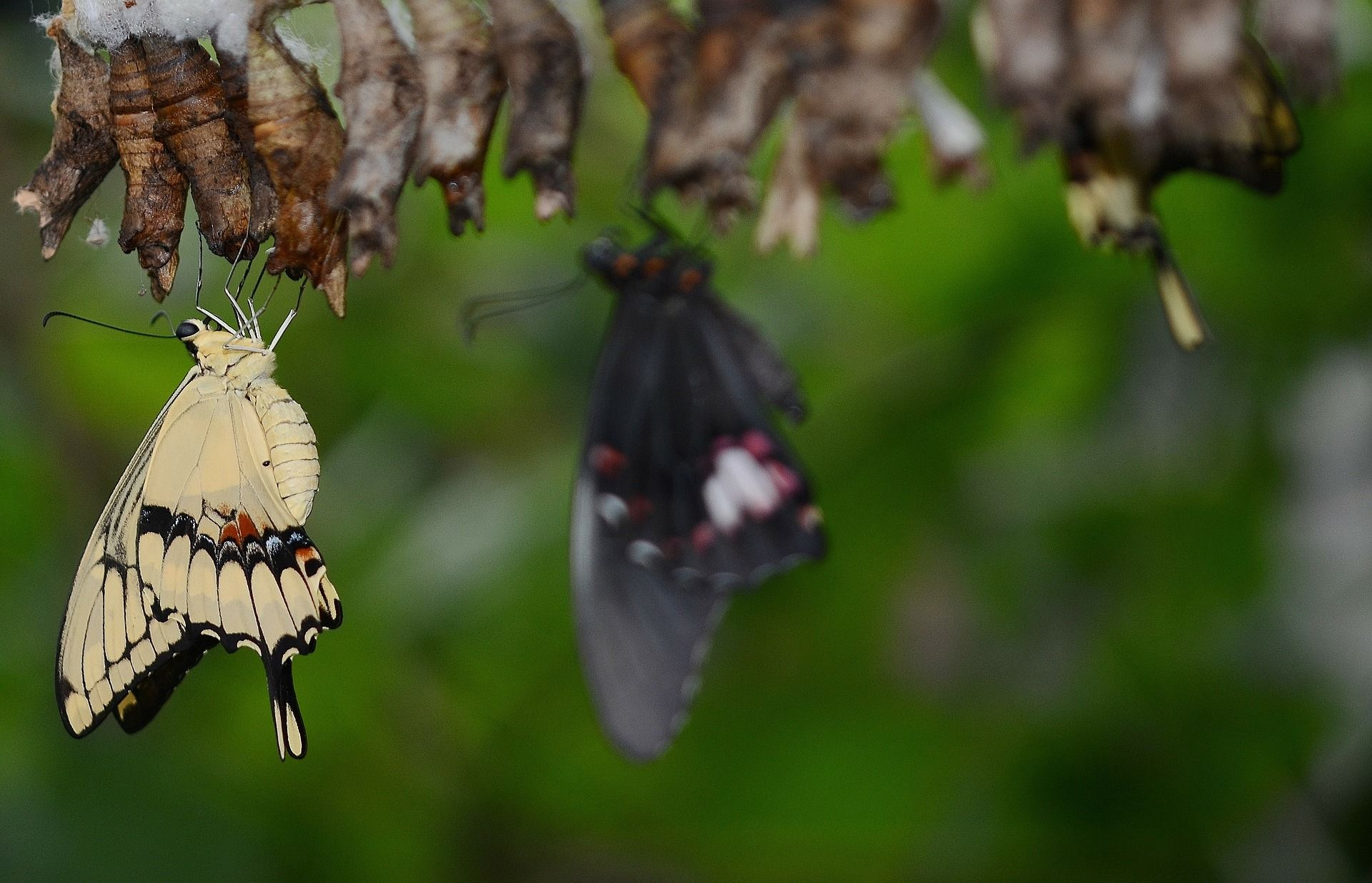 swallowtail-butterfly-329377_1920.jpg